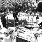 Enregistrament del disc Cançons de Festa a Algaida. Fotografia de Joan Ramon Bonet, 1976